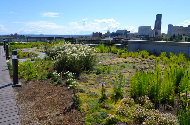 view from the roof of the Chloe Apartment Building, looking toward downtown Seattle